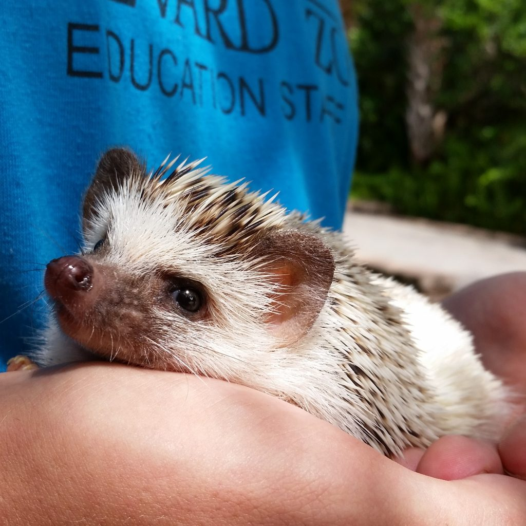 Small Mammal Care