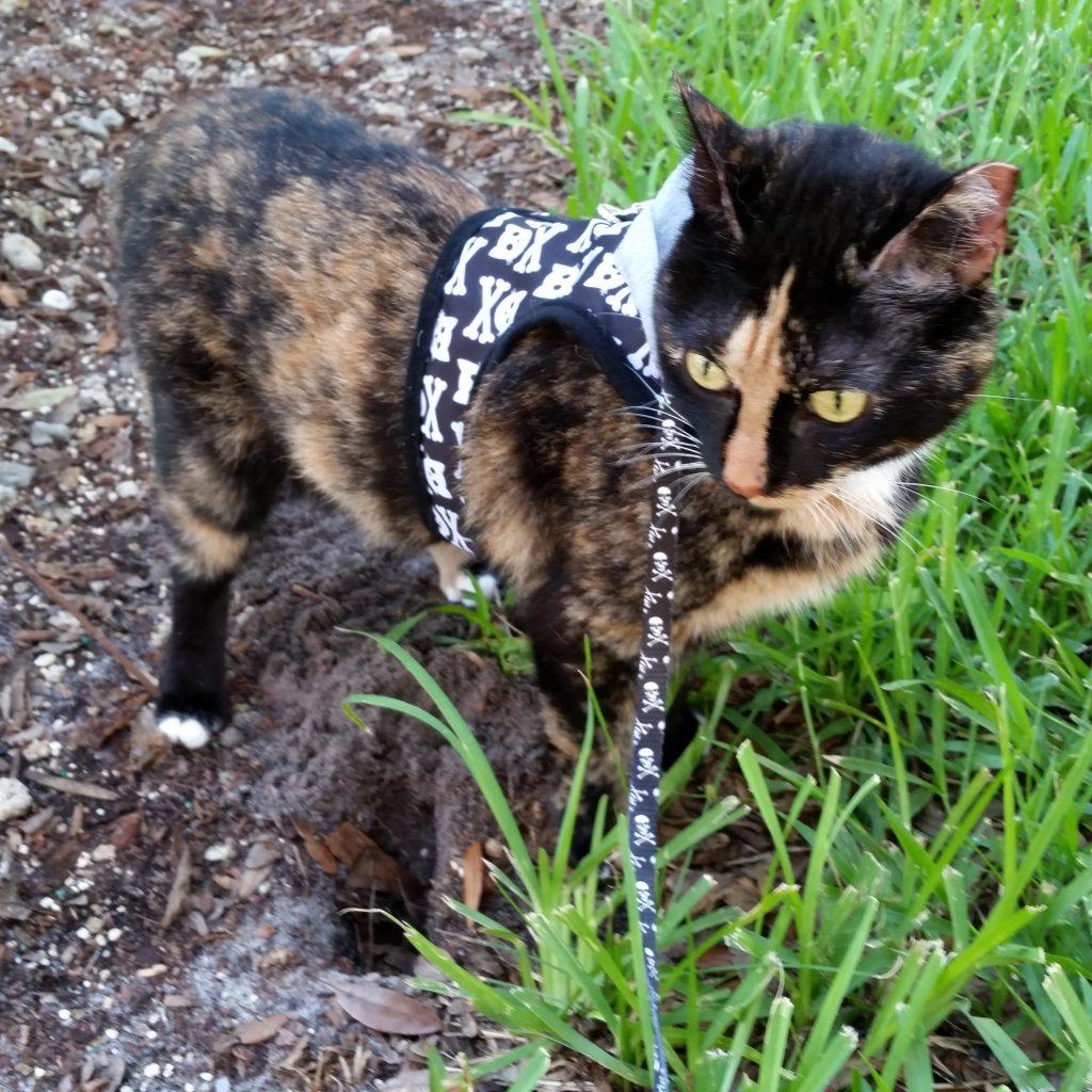 Philadelphia cat trainer