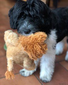 Puppy Training Philadelphia