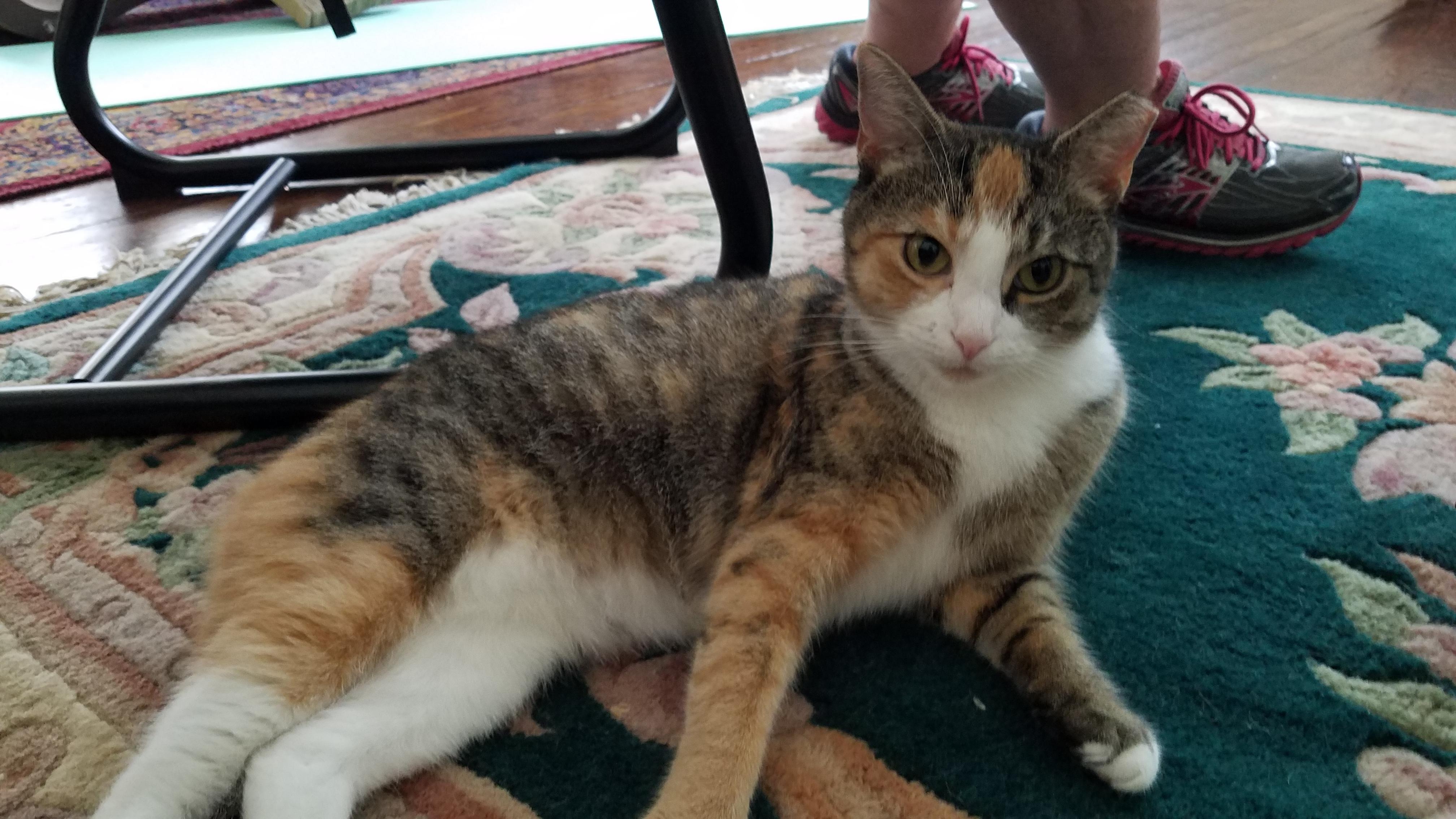 Cat Behaviorist Philadelphia
