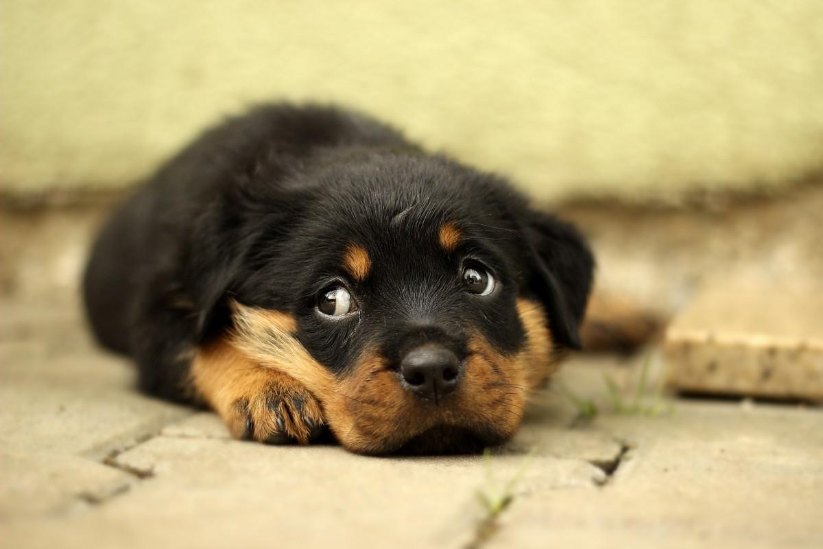 Online Puppy Training